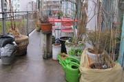 Balkonpflanzen. (Bild: Christian Volken)