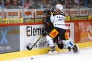 Flexible Banden (auf dem Bild checkt Zugs Dominic Lammer den Berner Luca Hischier) sollen das Verletzungsrisiko von Eishockey-Spielern minimieren. (Bild: Peter Klaunzer / Keystone)