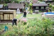 Ramona Geiger (24) und Claude Hagen (27) arbeiten derzeit ungefähr acht Stunden die Woche in ihrem 317 Quadratmeter grossen Schrebergarten im Gebiet Sedel. (Bild: Manuela Jans-Koch / Neue LZ)