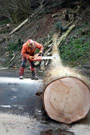 Michael Rogenmoser entastet einen Baumstamm im Oberwil-Wald bei Littau. (Bild Nadia Schärli)