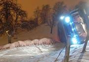 Die Schweine neben dem umgekippten Lastwagen. (Bild Luzerner Polizei)