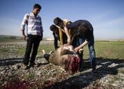 Kurden schlachten ein Rind entlang der Strasse beim Zab Fluss beim Dorf Chammah. (Bild: Stefan Kaiser)