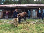 Oben: Zwei Eringer Kühe bei einem Showkampf am Zuger Stierenmarkt 2009. Unten: Thomas Aeschi mit seiner Lulu im Stall (links) und mit der Patenkuh Sheila auf der Alp Tschorr im Wallis. (Bild: PD/Thomas Aeschi)