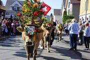 Alpabfahrt im Entlebuch: Festlich geschmückte Kühe ziehen durchs Dorf. (Symbolbild) (Bild: PD)