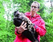 Tierarzt Martin Wehrle pflegt den Bartgeier Noel-Leya im Tierpark Goldau wieder gesund. (Bild: PD)