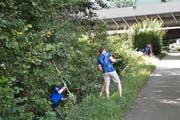 Am Dammweg wurde eine junge Frau vergewaltigt. Polizisten suchen den Tatort nach Spuren ab. (Bild: Beatrice Vogel (Emmenbrücke, 22. Juli 2015))