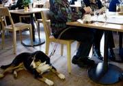 Ein Hund im Restaurant. Ist das okay? (Bild: LZ)