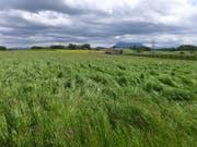 Mitten durch diese Seetaler Landschaft würde die geplante Talstrasse führen. (Bild: querfeldein.ch)