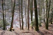 Ein vielfältiger Mischwald. (Bild: pd)