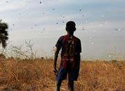 Ein Junge wartet auf Lebensmittelhilfen, die World Food Programme über dem südsudanesischen Dorf Rubkuai abwirft. (Bild: Siegfried Modola/Reuters (18. Februar 2017))
