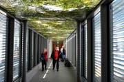 Der «Waldachin» in der Passerelle belebt das Spital. (Bild: Romano Cuonz / Neue OZ)