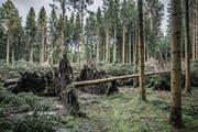 Entwurzelte und umgestürzte Bäume: Hier hat Sturm Burglind gewütet. (Bild: Pius Amrein (Hohenrain, 8. Januar 2018))