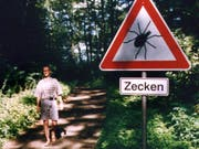 In der Schweiz sind seit Anfang 2017 so viele Menschen nach Zeckenbissen erkrankt, wie seit zehn Jahren nicht mehr. (Archivbild) (Bild: KEYSTONE/EPA DPA/IMMUNO)