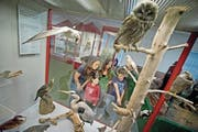 Eine Familie schaut sich die Ausstellung des Natur-Museums an. (Bild: Pius Amrein (Luzern, 5. September 2014))
