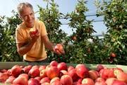 Die frisch gepflückten Gala-Äpfel vom eigenen Baum schmecken offensichtlich wunderbar: Hans Fischer vom Hof Rohrmatt in Gelfingen LU. (Bild Eveline Beerkircher)