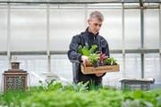 Patrick Biedermann (33) stellt Pro-Specie-Rara-Produkte für die Kundschaft in seiner Gärtnerei in Ruswil zusammen. (Bild Pius Amrein)