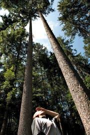 Forstfachperson Patrik Hofer begutachtet einen Fichtenbestand im Gebiet Lifelen in der Gemeinde Schwarzenberg. (Bild Nadia Schärli)