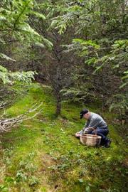 Für eine ideale Pilzsaison ist das Wetter derzeit noch zu trocken. Bild: Getty