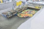 Würzenbach: Schwemmholzrückhalt am neu geplanten Einlaufbauwerk während eines Hochwassers im Laborversuch. (Bild: PD)