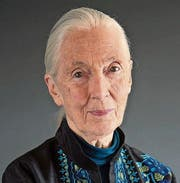 Jane Goodall (83). (Bild: Jane Goodall Institute)