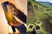 Die Neuenburger Spezialität «Non Filtré» wird vor dem Genuss leicht geschüttelt (links). Ernte von Pinot-noir-Trauben in Bevaix (NE). (Bilder: Hans-Peter Siffert/weinfoto.ch)