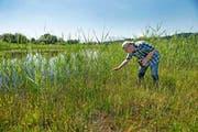 Reservatspfleger Niklaus Troxler weiss, wo die versteckten Bewohner im Naturschutzgebiet Ronfeld zu finden sind. (Bild: Nadia Schärli)
