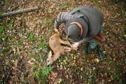 Ein Jäger aus dem Kanton Luzern mit einem erlegten Reh. Bild: Dominik Wunderli (Römerswil, 9. Oktober 2015)