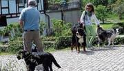 Müssen Hunde künftig an die Leine? Diese Frage wird Thema der heutigen Sitzung sein. (Bild: Werner Schelbert (18. Mai 2016))