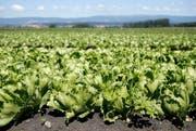 Nur noch den Bauern soll ein beschränkter Einsatz von Glyphosat erlaubt sein. (Symbolbild / Keystone)