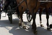 Auch die Pferde blieben unverletzt. (Symbolbild / Archiv Neue LZ)