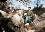 Bauer Rainer Henggeler aus Oberägeri hat eine Kuh verloren, weil sie Alu gefressen hat. (Bild Stefan Kaiser)