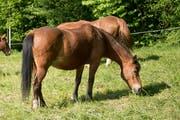 Ein Pferd auf der Weide. (Bild: Maria Schmid)