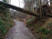 Umgestürzte Bäume auf Luzerner Stadtgebiet. (Bild: Raphael Müller, Stadtforstamt Luzern)
