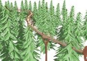 Der erste Baumkronenweg der Schweiz im «Eiszeitwald» soll den Besuchern ein Walderlebnis bieten. (Bild: Visualisierung pronatour GmbH Leobendorf)