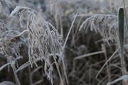 In der Zentralschweiz gab es am Donnerstagmorgen verbreitet Frost. (Symolbild) (Bild: Boris Bürgisser / Neue LZ)