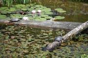Patinnen und Paten des Tierparks Goldau ermöglichen Projekte wie den im Juli eröffneten Sumpfschilkröten-Weiher. (Bild: Irene Infanger / Neue SZ)
