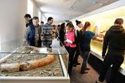 Besucher bestaunen Exponate im Natur-Museum Luzern, darunter einen Mammutzahn (vorne). (Bild Nadia Schärli)