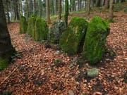 Nirgendwo in der Schweiz finden sich mehr megalithische Spuren als im Säuliamt.