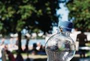 Wer derzeit draussen etwas Süsses trinkt, bleibt nicht lange alleine. (Bild: Stefan Kaiser (Zug, 7. August 2017))