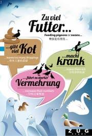 Mit diesem Plakat macht die Stadt Zug darauf aufmerksam, das Füttern von Seevögeln und Tauben zu unterlassen. (Bild: pd)