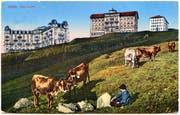 Oben: Die drei Hotels auf Rigi Kulm, von links: Hotel Schreiber, erbaut 1872 bis 1875, Hotel Regina Montium, eröffnet 1857, und Hotel Rigi-Kulm, eröffnet 1848, abgebildet auf einer Postkarte.