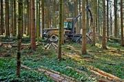 Waldarbeiten mit einer Holz-Erntemaschine im Sädelwald in Luzern. (Bild: Pius Amrein / Neue LZ)