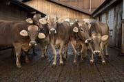 Es gibt immer weniger Bauernhöfe (Symbolbild). (Bild: Dominik Wunderli / Neue LZ)