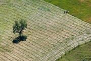 Symbolbild: Ein Bauer beim Heuen. (Bild: Stefan Kaiser / LZ)