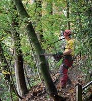 Förster privater Waldorganisationen sollen künftig auch öffentliche Aufgaben übernehmen. Etwa die Anzeichnung von Holzschlägen in Privatwäldern. (Symbolbild: Boris Bürgisser (Ebikon, 5. November 2013))