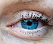 Auge / Lid (Bild: Dittrich/Caro)