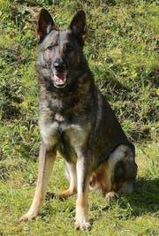 Polizeihund Xando. (Bild: Luzerner Polizei)