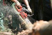 Motorsägen scheinen ein beliebtes Diebesgut zu sein. Im Bild ein Forstarbeiter beim Sägen. (Bild: Keystone (Archiv))