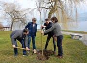 Philipp Küng, Christian Sidler, Künstlerin Anne-Julie Raccoursier und Alexandra Townend Genoni (von links) pflanzen im Waldheim einen Apfelbaum. (Bild Romano Cuonz)