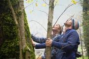 Urs Jann (links) und Franz De Baere inspizieren einen ausgewählten Baum. (Bild David Eppenberger)